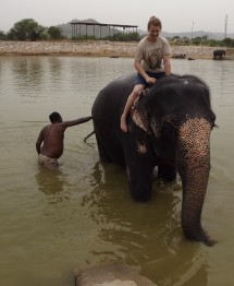 Los elefantes Jaipur Tour