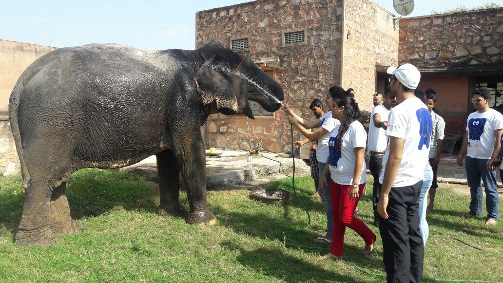 Programas de Voluntariado de Elefantes en la India