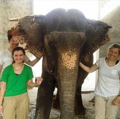 3-days-elephant-jaipur-propgram