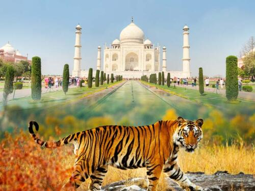 taj mahal with wildlife tour