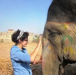 work-with-elephants
